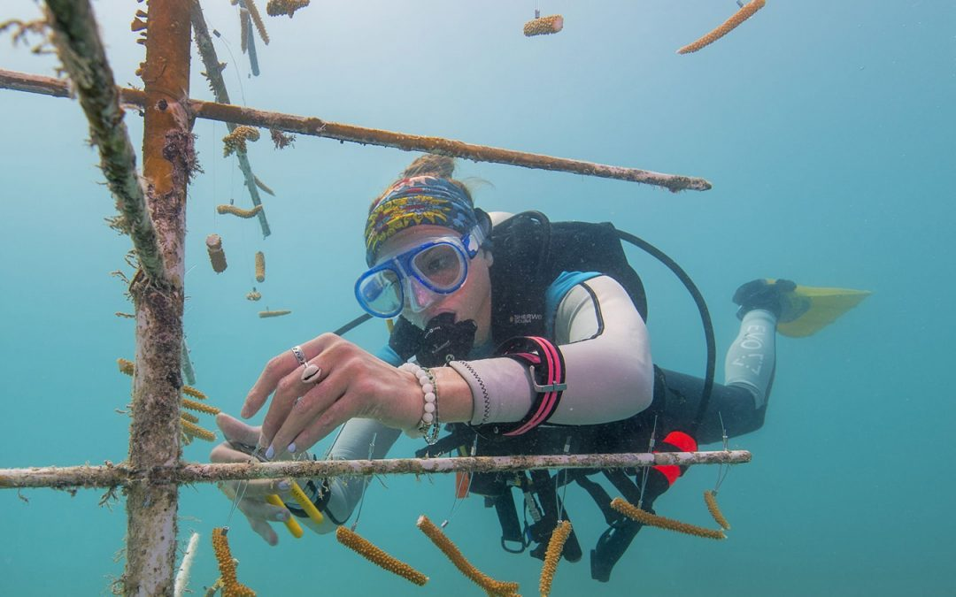 This method could help our coral reefs recover!
