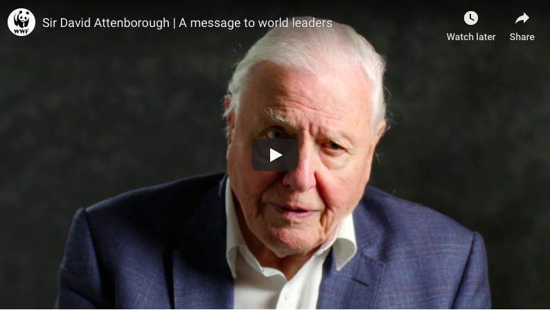 When Sir David Attenborough speaks, even the ants listen!